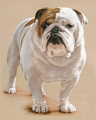 Dog pastel portrait drawing