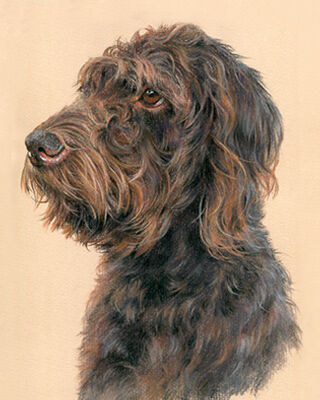 dog pastel portrait drawing
