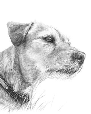 Dog pencil portrait drawing