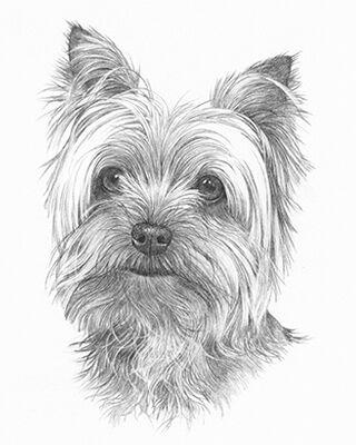 Dog pencil portrait drawing