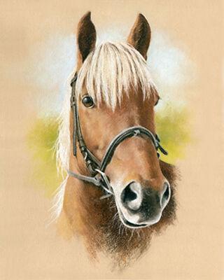 horse pastel portrait drawing