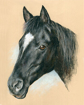 horse pastel portrait drawing