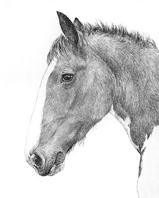 Horse pencil portrait drawing