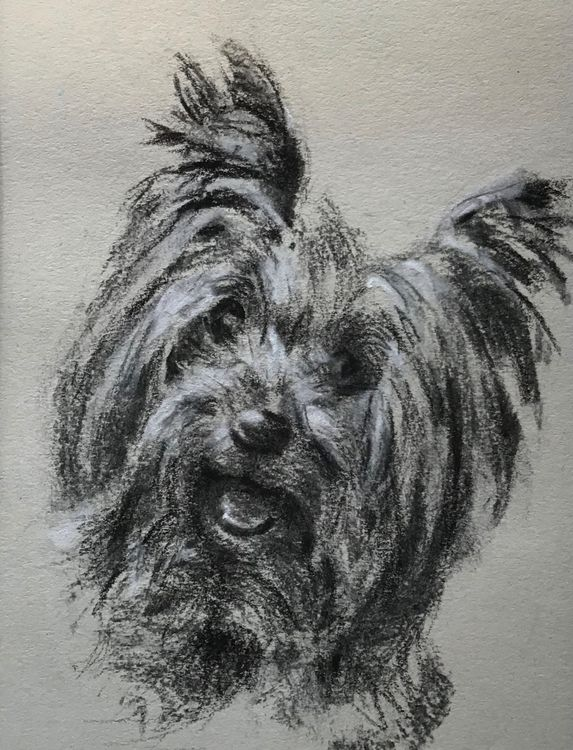June 7th One Day Pet Portrait Drawing Workshop £55 10am-4pm We will be using charcoal, black and white soft pastel on toned paper Bring along clear, large (A4) photo references All materials provided All levels welcome