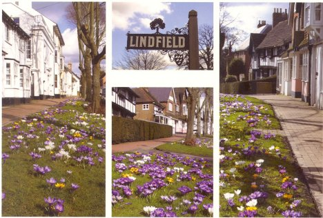 Crocus Time in Lindfield: West Sussex