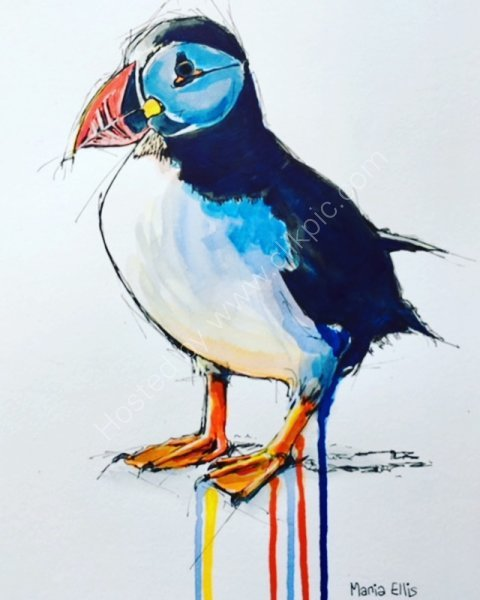 'A Scilly Puffin'