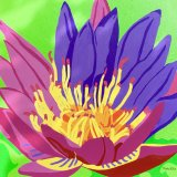 'Water Lily'