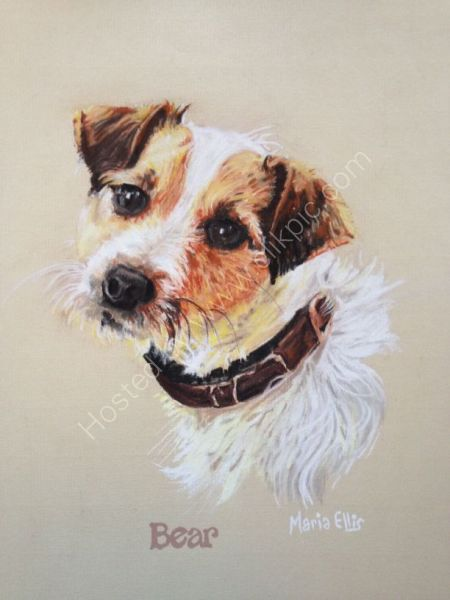 Bear the Parsons Jack Russell
