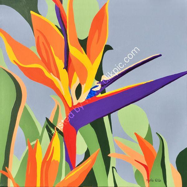 'Bird of Paradise'