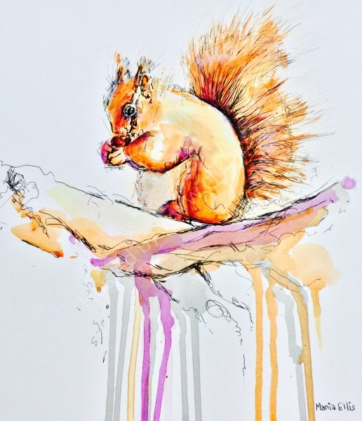 'Red Squirrel' Greetings card