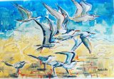 Caribbean Terns
