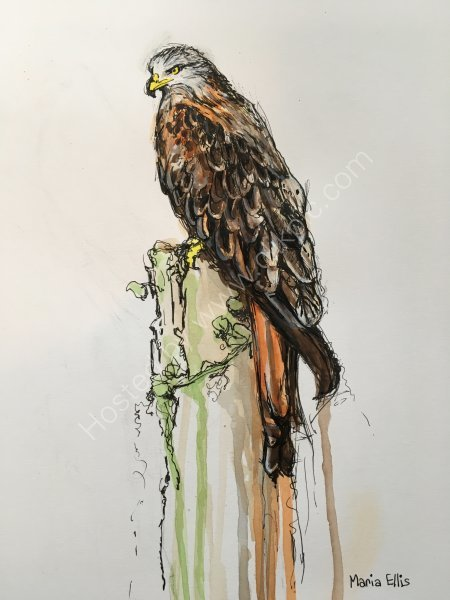 Red Kite - SOLD