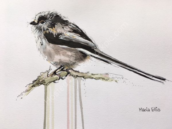 'Long tailed Tit'