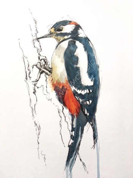Woodpecker too