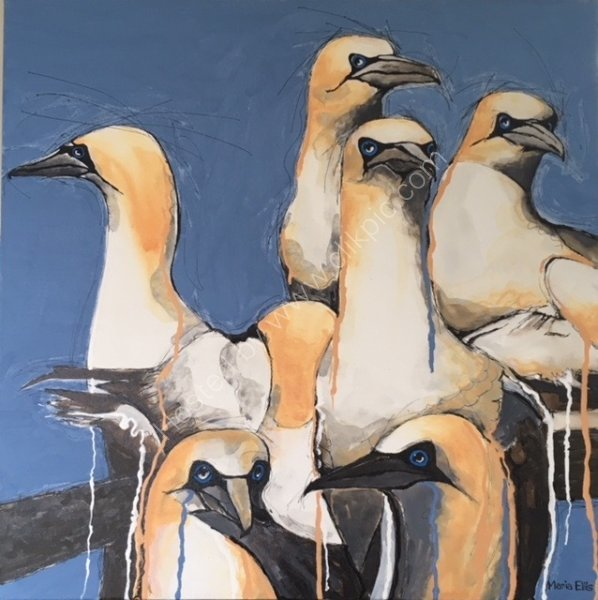 Scilly Gannets