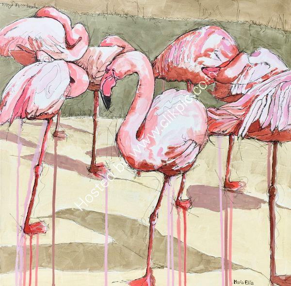 'Pretty Flamingos'