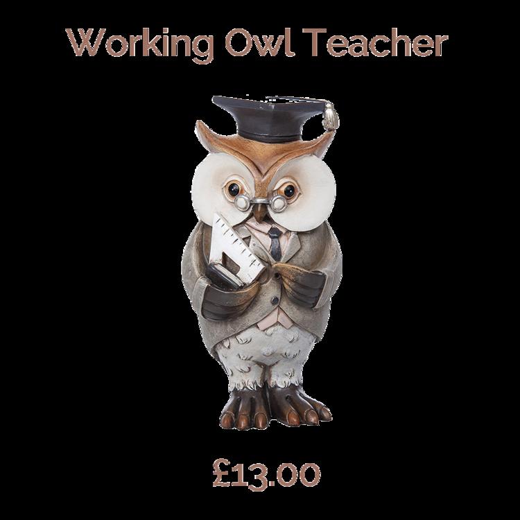 Working Owl Teacher