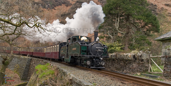 Earl of Merioneth passing Coed y Bleiddiau, Festiniog Railway.
