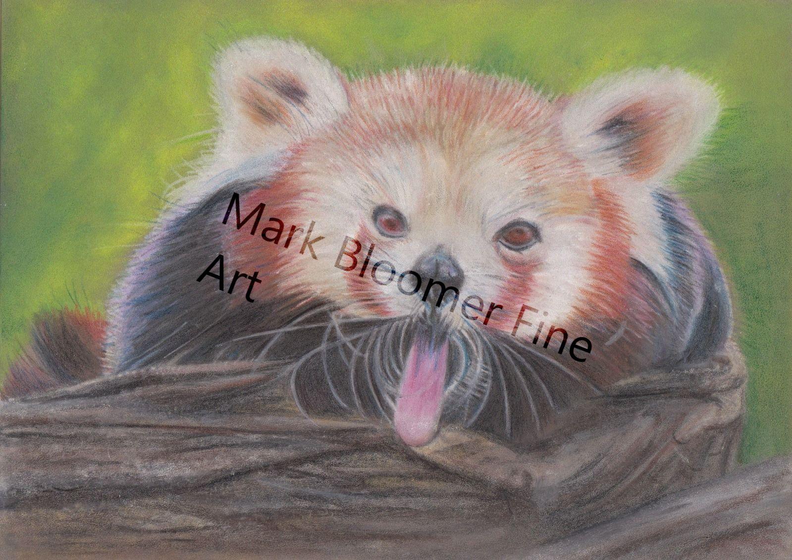 Cheeky Red Panda