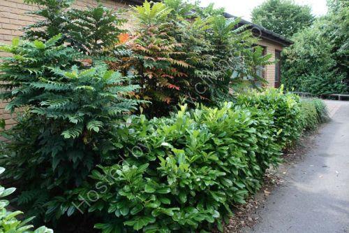 An overgrown shrub bed was chosen