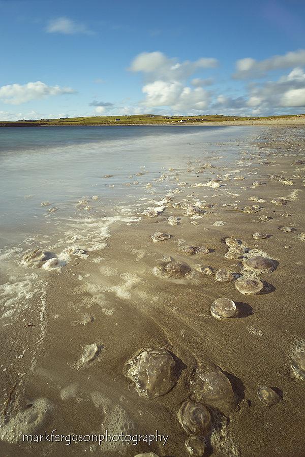 Skaill Bay jellyfish