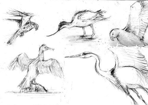Birds, West Wales