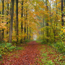 Autumn Path Trough The Woods