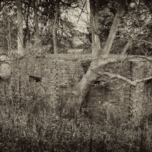 World War II Bunker With Tree