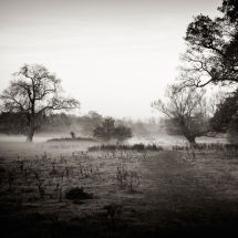 Field And Trees In A Light Mist