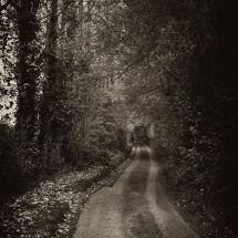 Wondering Lane