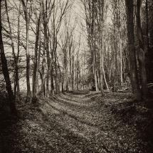 Westerham Woods