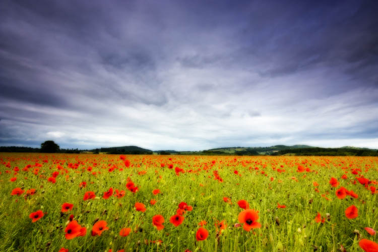 Poppy Field & Malvern Hills.