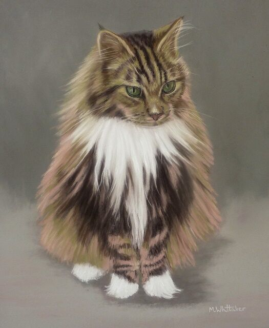 Original Pastel Painting of Norris the Maine Coon.