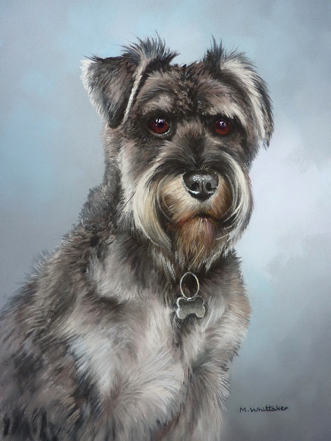 Pastel Portrait of Ryley, Minature Schnauzer