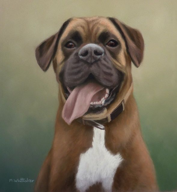 Original Pastel Painting of Willy the Boxer
