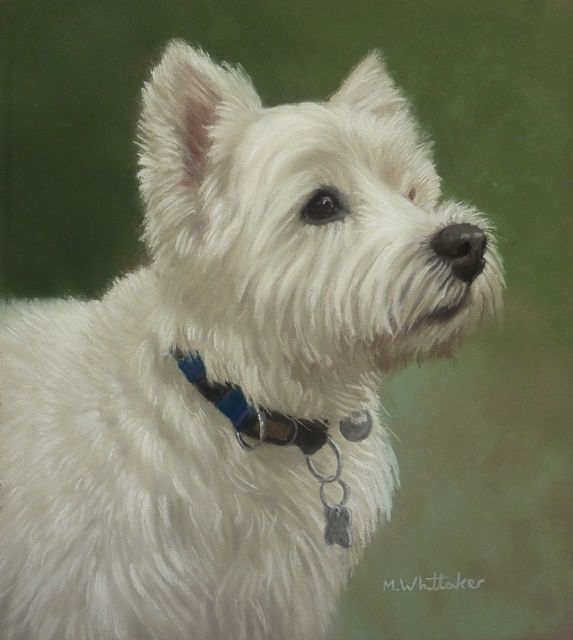 Original Pastel Painting of Alfie.