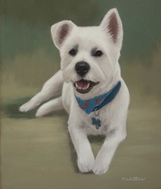 Original Pastel Painting of Toby The Westie