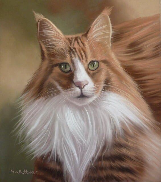 Original Pastel Painting of Romeo the Maine Coon Cat.