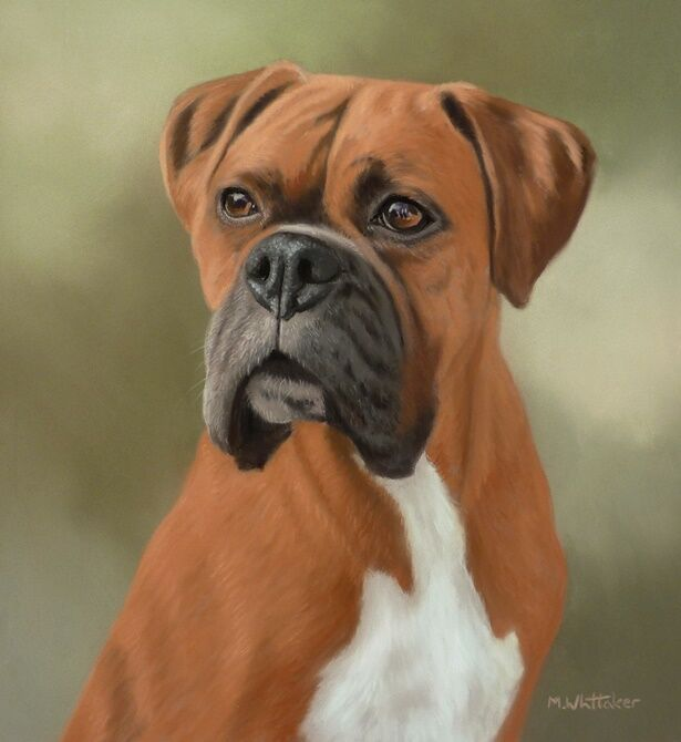 Original Pastel Painting of Judge the Boxer
