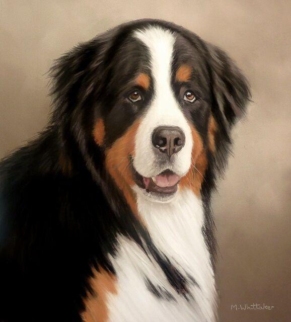 Original Pastel Painting of Neko the Bernese Mountain Dog