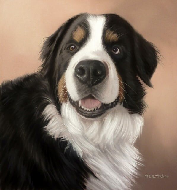 Original Pastel Painting of Daisy the Bernese Mountain Dog