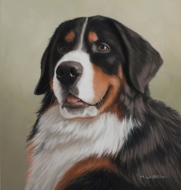 Original Pastel Painting of Charley the Bernese Mountain Dog