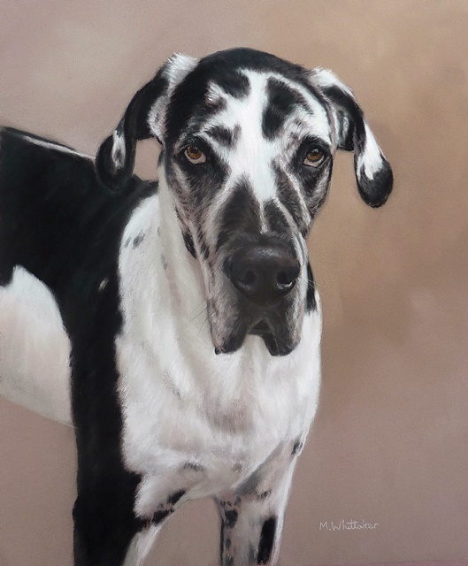 Original Pastel Painting Of Prince The Great Dane