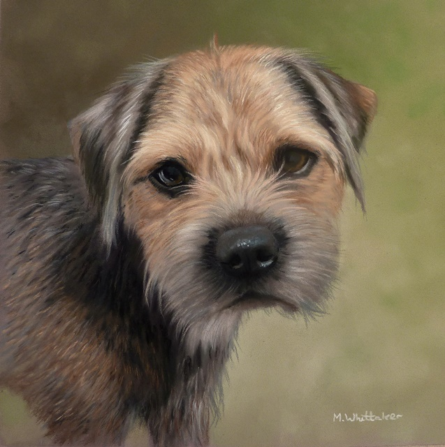 Original Pastel Painting Of Cooper The Border Terrier.