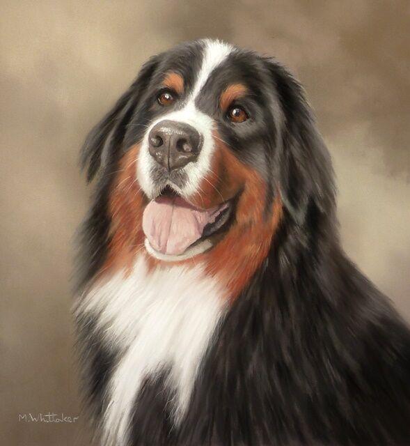 Original Pastel Painting of Jacy the Bernese Mountain Dog