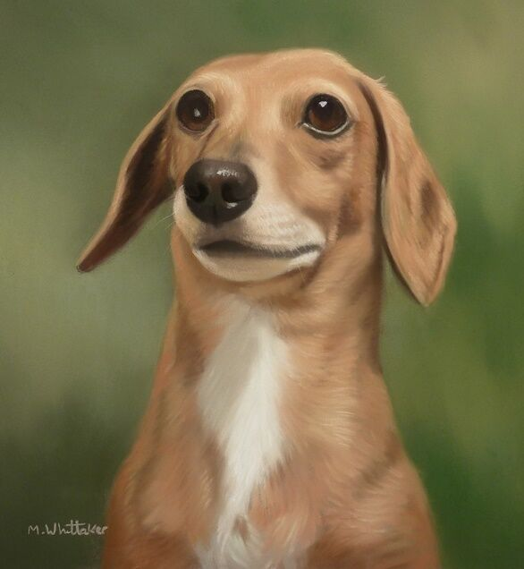 Original Pastel Painting of Jasmine the Dachshund