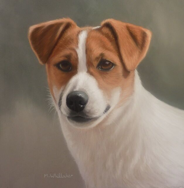 Original Pastel Painting of Fedra the Jack Russell
