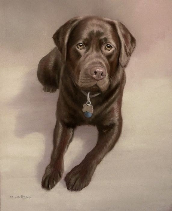Original Pastel Painting Of Baloo The Chocolate Labrador.