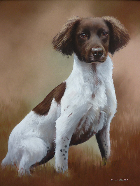 Pastel Portrait Of Snip, Springer Spaniel