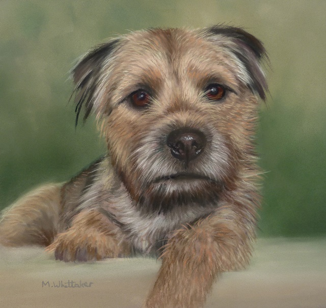 Original Pastel Painting Of Rory The Border Terrier